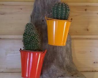 cache pot Driftwood