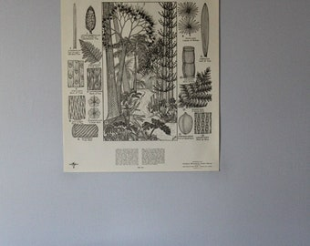 Vintage Coal-Forming Swamp Forest classroom chart from Turtox