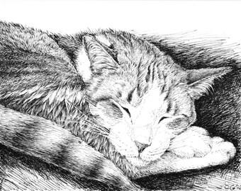 Animal sketches, cat art prints, black and white, pen and ink artwork, original drawing, cat sketch art, sleeping cat, pet illustration