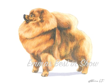 Pomeranian Dog - Archival Fine Art Print - AKC Best in Show Champion - Breed Standard - Toy Group - Original Art Print