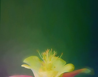 Columbine - digitally painted color photograph