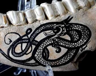 Celtic Norse Sea Serpent Dragon Scrimshaw Nautical Decor Beach Found Cow Bone
