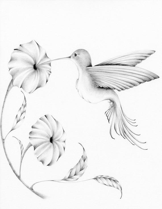 Hummingbird Drawing Giclee Fine Art Print of my Original