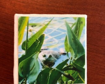 Vermont Froggie 2x2 magnet