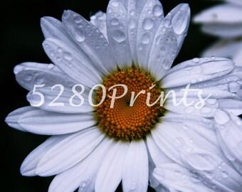 Digital Download - Flower- Photography- Rain- Floral- White- Yellow- Wildflower- Petals- Prints- 5280