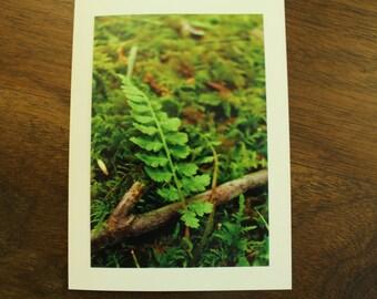 Nature notecard - Tiny Fern