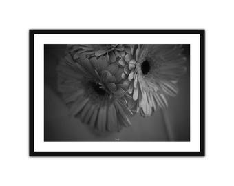 The Gerberas • fine Art Photography • Lyon