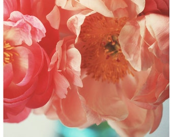 Nature Photograph - Peony Photograph - Flower Photograph - Spring Art - Paeonia 4 - Fine Art Photograph - Alicia Bock - Floral Print