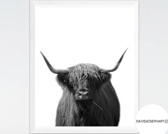 Highland Cow Print, Highland Bull Print, Black and White, Nursery Wall Art, Cattle Photography, Digital Download, Highland Cow Printable