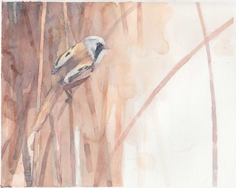 BEARDED TIT mounted watercolour print by Ruth Nolan