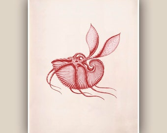 Nautical art Seashell  Print in Garnet red, Vintage Argonauta sea shell print,  Marine Wall Decor, beach cottage decor  Print, Botanical Art