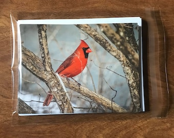Bird Note Cards, Cardinal note cards, single-sided blank note cards, greeting cards, post cards, 8 photographic note cards, stationery