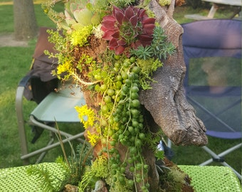 Driftwood And Live Succulents: Naturally Beautiful!