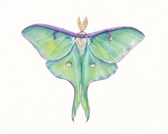 5x7 Luna Moth (Actias luna) Print of watercolor