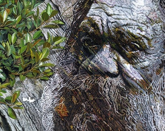 Older Wisdom, The Land Remembers - Ltd Ed. Giclée Art Print on Canvas by Jane Nicol