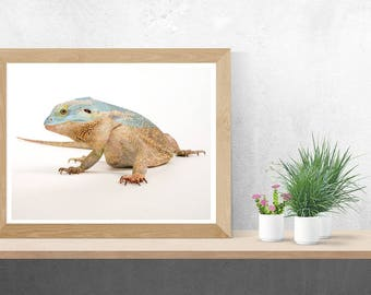 Heart and Soul of a Bearded Dragon Fine Art Print
