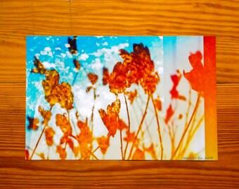 6x9 Gorgeous spring sunset print