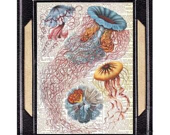 JELLYFISH art print Antique Haeckel's Illustration beach nautical ocean sea creatures marine natural science blue red wall decor 8x10, 5x7