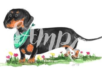 Bruno the mini dachshund watercolour and pen