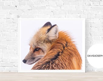 Fox Print, Fox Photography, Red Fox Print, Animal Print, Woodland Print, Digital Download, Fox Wall Art, Fox Decor, Fox Printable
