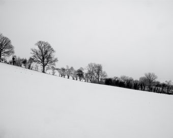 Filagree trees in the snow.
