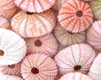 "25 Small Pink Sea Urchins (1.25"" - 1.5"") *Top Quality*  Light to Dark Pink - Seashell/Nautical/Beach Decor/Beach Wedding Decor"