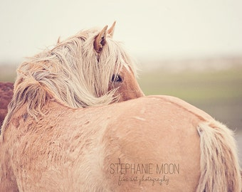 Wild Horse Photography, Palomino Wild Horse looking over his shoulder with mane,