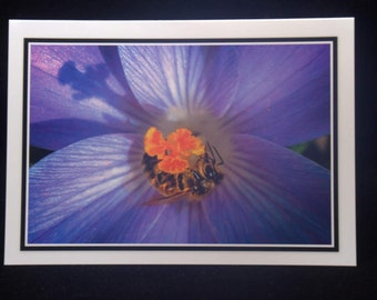 A Honeybee On A Crocus Flower 5x7 Blank Card By ThomasMinutoloPhotos