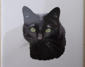 Ceramic Tile black cat accent backsplash serving tray