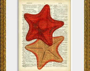 Book page art print - RED STARFISH - upcycled antique dictionary page with a retooled antique sea life illustration - wall art