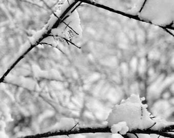L'hiver #14 Frozen Tree Branch in Snow Scenic Winter Photograph