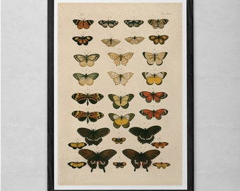 VINTAGE BUTTERFLY PRINT- Antique Nature Print - Nature Art Print Butterfly Art Antique Natural History Print Nature Wall Art Butterfly Print