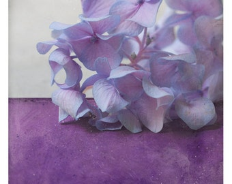 Pole Hortensia (Nature Photography - Fine Art Print - Hydrangea Flower -  Botanical  - Monochromatic - Spring - painting - Purple - Violet)