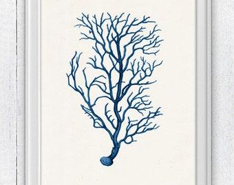 Blue coral no.02 - sea life print - Antique Illustration , Marine  sea life illustration A4 print SWC027