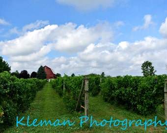 Ciccone Vineyard Magnet-READY TO SHIP