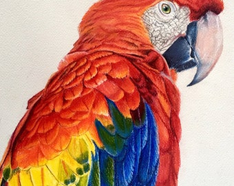 Macaw, PRINT,  Coloured pencil art, Bird, Parrot, Wildlife painting, Bird Art, Illustration Art, Parrot Art, Fine Art Prints, Free Shipping