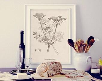 Print for kitchen, Parsley print, Botanical illustration, Kitchen print, Botanical clip art, Printable Kitchen wall art, PNG JPG 300dpi