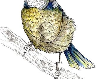 British bird art print, Blue Tit illustration, Bird lovers gift for the modern farmhouse
