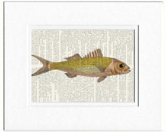 Fish, 18oo's ruby snapper print