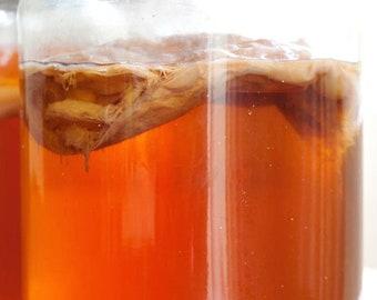 Kombucha Tea with Scoby 32 oz