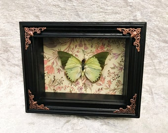 Green Charaxes Butterfly
