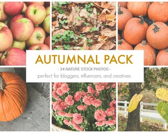 Stock Photos Blog Photography Pack, Royalty Free | Autumnal