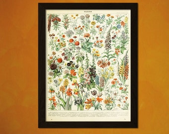 Vintage Flower Print 1909 - Adolphe Millot Poster Flower Home Decorating Botanical Print Romantic Floral Illustration Larousse