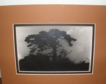 Vintage Black and White Photograph of Tree