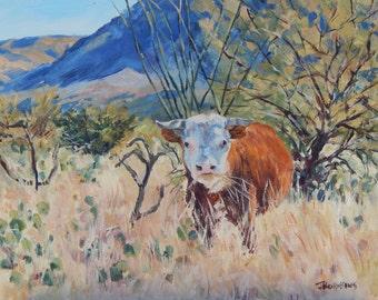Free Range Hereford Bull