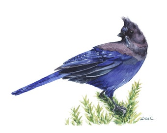 """Watercolor Print  """"Steller's Jay"""" Bird Art, Bird Print, Wall Decor, Bird Nursery print"""