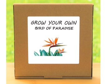 Unusual Windowsill Gardening Gift - Grow Your Own Bird of Paradise Plant Kit
