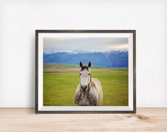 Colorful Horse Photograph, White Horse in the Mountains, Physical Horse Print