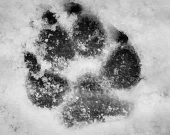 Dog Photography, Animal Photography, Dog Paw Print, Paw Print, Dog Photo Print