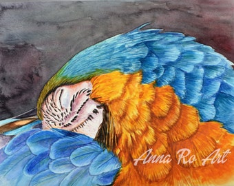 Sleeping Macaw parrot bird watercolor painting print
